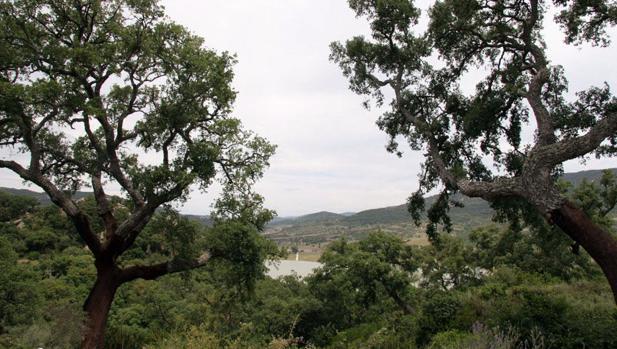 El plan de gestión del parque Los Alcornocales prevé una inversión de nueve millones