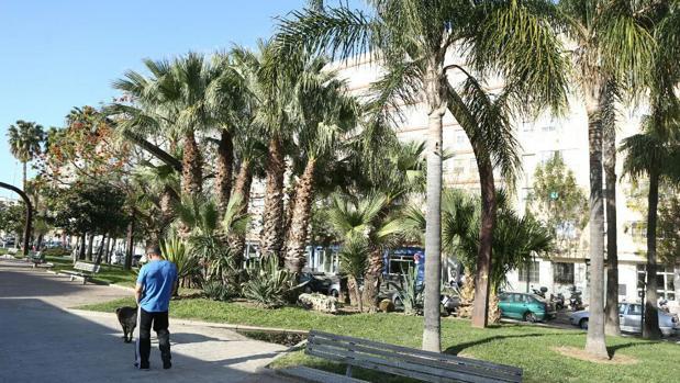 Ciudadanos denuncia que el ayuntamiento dejar a los - Mantenimiento parques y jardines ...