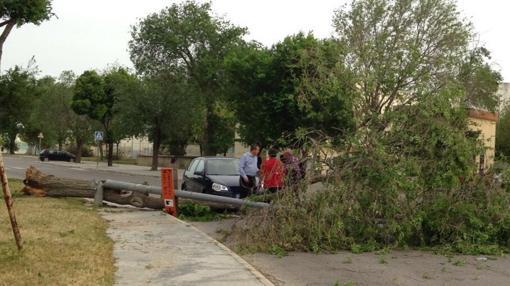 Árbol caído en Puerto Real