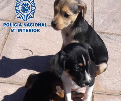 Detenido en La Línea por abandonar a tres cachorros en una bolsa en la carretera