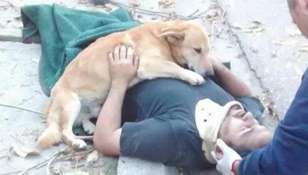 Así es la historia del perro fiel que no quiso abandonar a su dueño en un accidente