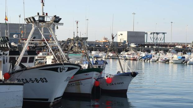 El puerto de Barbate acoge a 50 barcos