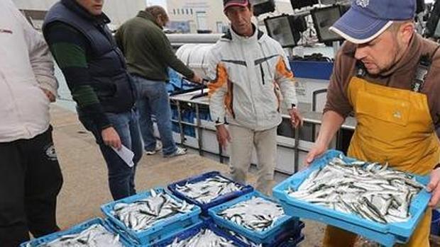 Critican la «mala gestión» del sector en la pesquería de la sardina