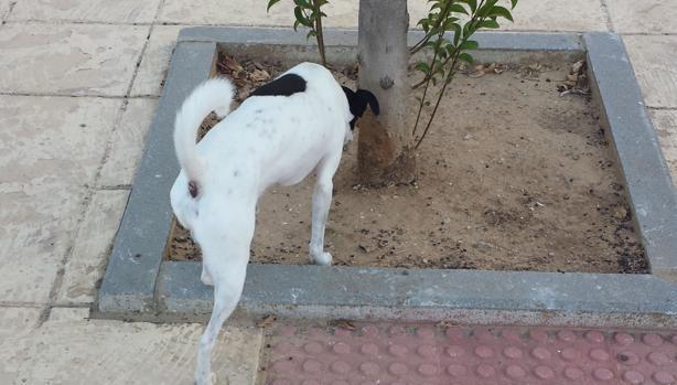 Un perro alisquea el tronco de un árbol