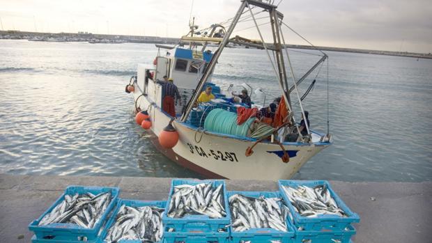 Un barco descarga los boquerones capturados en el puerto de Barbate
