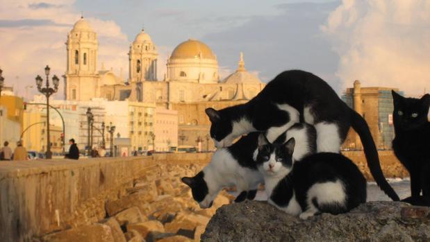 Varios gatos callejeros por las murallas del Campo del Sur de Cádiz