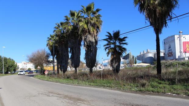 Un carril ciclopeatonal conectará San Juan Bajo con Alavera