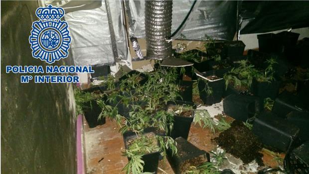 Plantación de marighuna 'indoor' en Jerez