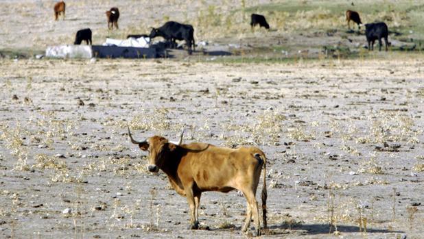 El PP reclama a la Junta ayudas para los ganaderos afectados por la sequía en la Sierra Morena de Sevilla