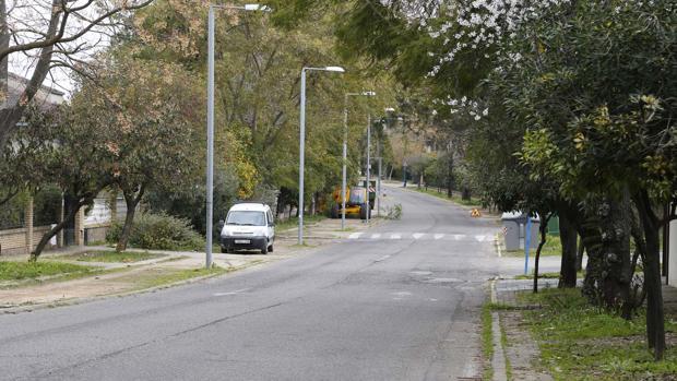 El Ayuntamiento sustituirá once árboles en mal estado por otros quince o veinte nuevos