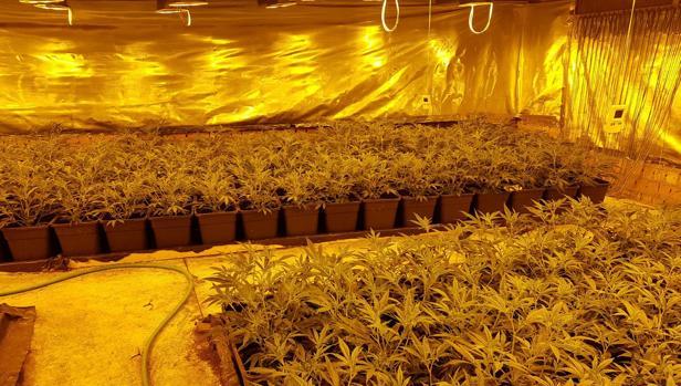 Imagen de la nave donde se ocultaba el cultivo de marihuana.