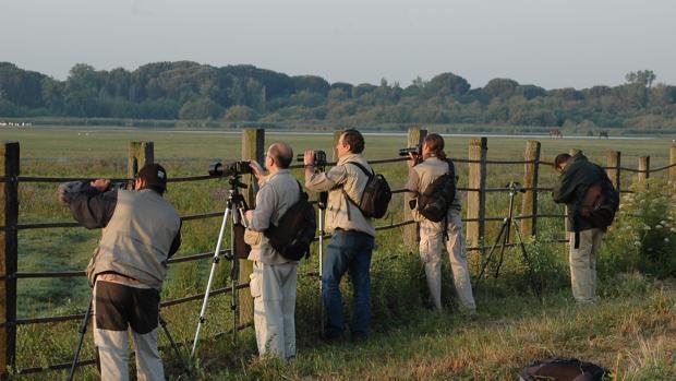 Ornitólogos durante su observación