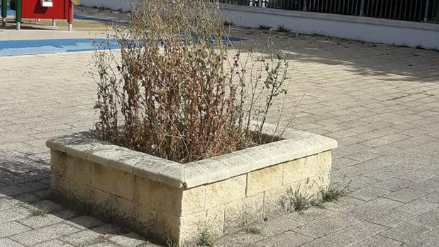 Los vecinos se quejan del estado de abandono de los jardines.