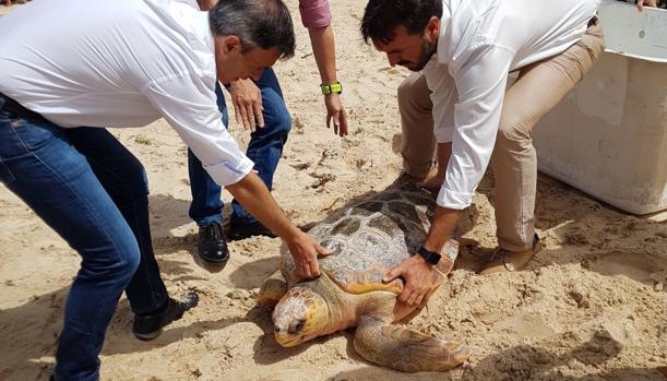 El consejero y los cuidadores de la tortuga en el momento de su liberación en playa Chica (Tarifa)