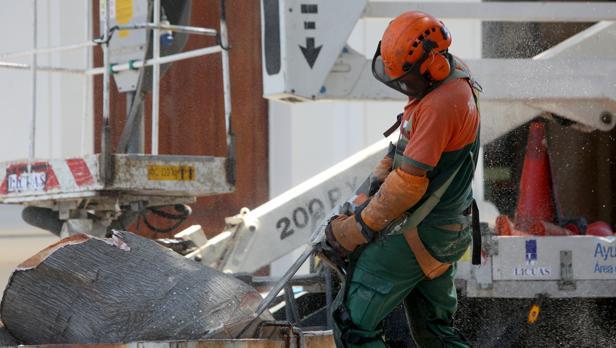 Los operarios retiran la rama que se desprendió del ficus del hospital de Mora el pasado domingo.