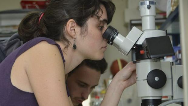 Una investigadora durante sus labores de estudio.
