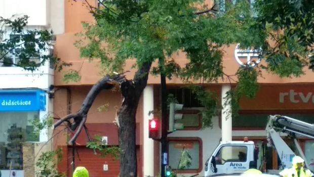 La lluvia ha derribado la rama del árbol enfrente del colegio de Las Esclavas.