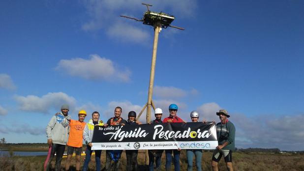 El proyecto de Endesa y Fundación Migres para preservar el águila pescadora.