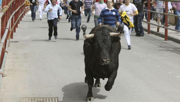 El toro embolao de Los Barrios.