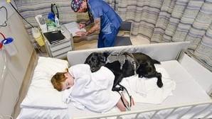 Mahe, el perro que nunca deja a su dueño autista, ni en la cama del hospital