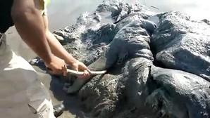 La imagen que ha sorprendido a Facebook: ¿Qué es esta «extraña criatura» que apareció en Acapulco?