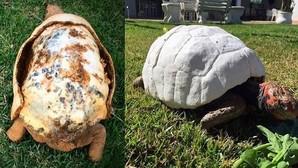Así se imprime un caparazón en 3D para una tortuga herida