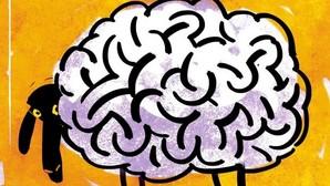 Un grupo de ovejas consume erróneamente cannabis y entra en una «espiral psicótica»
