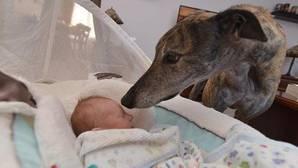 El perro rescatado que rehuía el contacto humano hasta que conoció al bebé de su familia