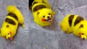 Un fan de Pokémon tiñe a su perro como un Pikachu