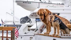 Top 3 destinos para viajar con tu perro