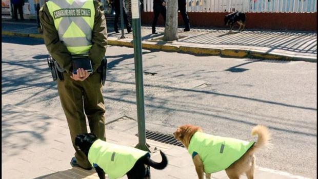 Un grupo de policías adopta a perros callejeros para darles «un trabajo» y un hogar