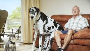 El perro más grande del mundo o el hombre que resiste al fuego, nuevos récord Guinness