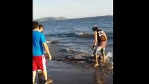 YouTube: Unos bañistas logran salvar a un delfín que había quedado varado en la playa