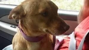 La dura carta en Facebook contra el dueño de un perro abandonado: «Algún día pagarás por lo que has hecho»