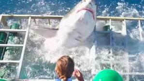 YouTube: El estremecedor momento en el que un tiburón blanco escapa de la jaula en la que estaba