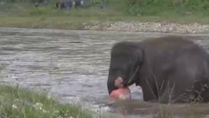 YouTube: Un heroico elefante se lanza a un río para salvar a su cuidador