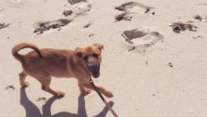 La isla paradisíaca del Atlático que sirve de refugio a perros abandonados