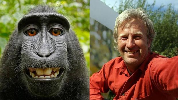 La batalla judicial entre un humano y un macaco por los derechos de un «selfie» llega a su fin