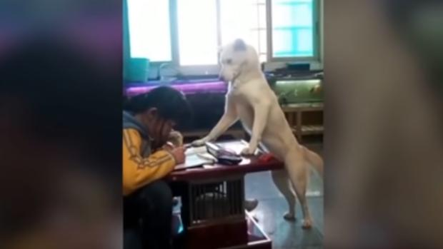 Perro supervisando que una joven haga los deberes