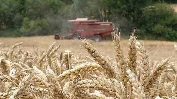 El gluten es una proteína presente en los cereales