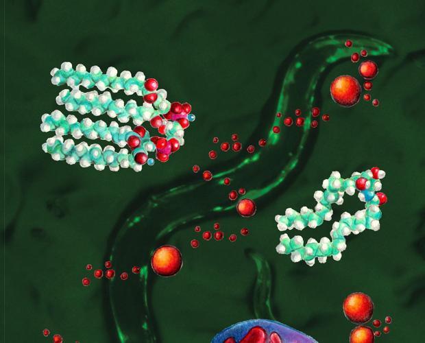 Gráfico del funcionamiento de las mitocondrias