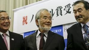 Qué es la autofagia y por qué le valió un Nobel al científico japonés Oshumi