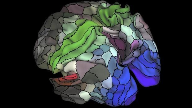 Mapa del área cortical del cerebro humano