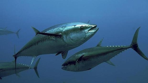Los grandes peces tienen mayores niveles de mercurio