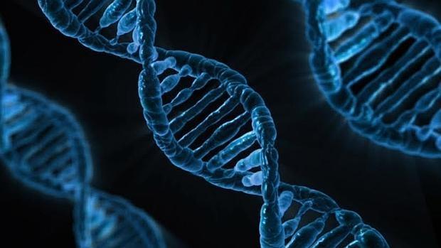 Las tijeras moleculares cortan el ADN