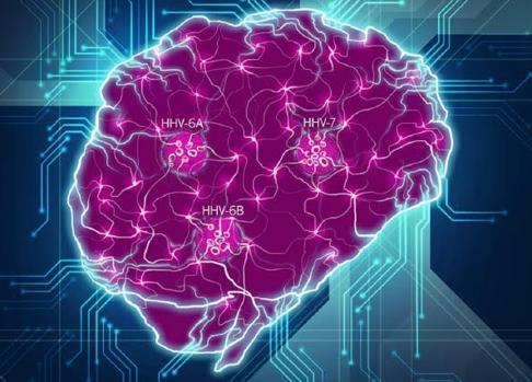 Interrupción de redes neuronales cerebrales por los herpesvirus