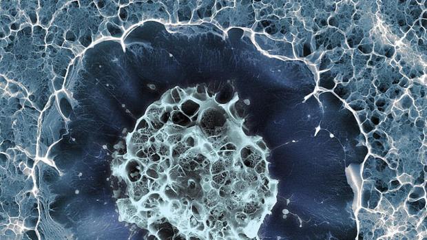 Células madre humana