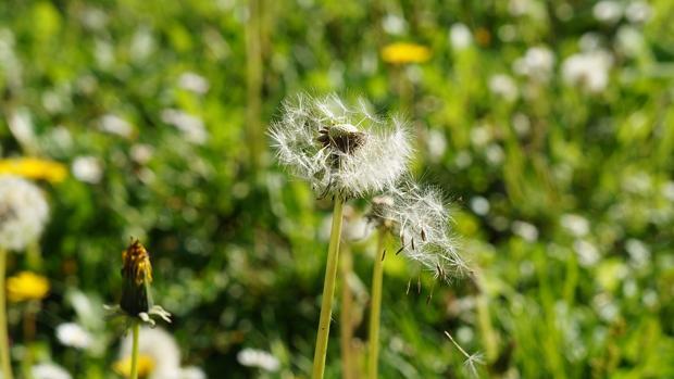 Llega la alergia primaveral