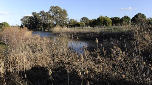 La laguna del parque del Tamarguillo cuya fauna supone un riesgo para el aeropuerto