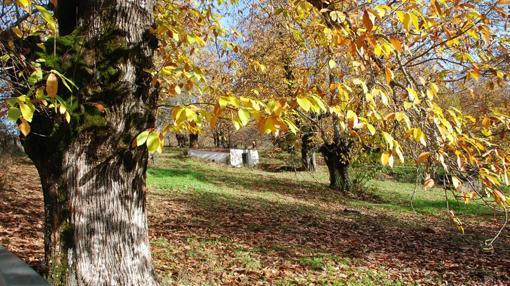 La subasta de Zent incluye suelos urbanizables en Castaño de Robledo (Huelva)
